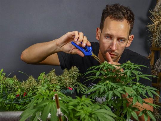 Ad - Dassie Grows