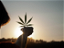 Growing In the New Age of Cannabis